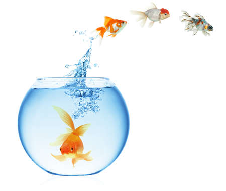 peces de acuario: Un pez de colores saltando fuera del agua para escapar a la libertad. Fondo blanco. Foto de archivo