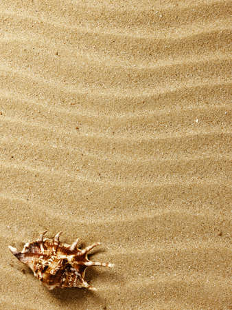 sea shells with sand as background Stock Photo - 9270487