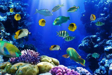corales marinos: Foto de una colonia de coral en un arrecife, Egipto Foto de archivo