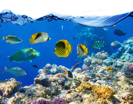 aquarium: Coral and fish in the Red Sea Egypt