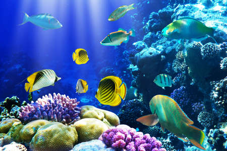 Photo of a coral colony on a reef, Egypt Stock Photo - 9270518