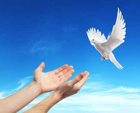 paloma: las manos liberadas en el cielo azul con el sol una paloma blanca