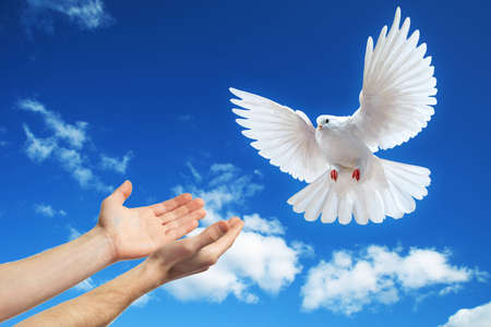 hands released into the blue sky to the sun a white dove Standard-Bild
