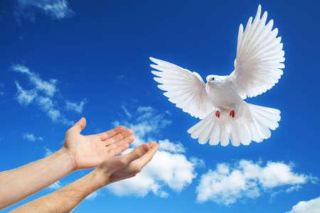 hands released into the blue sky to the sun a white dove Archivio Fotografico