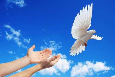 태양 흰색 비둘기에 푸른 하늘에 출시 된 손