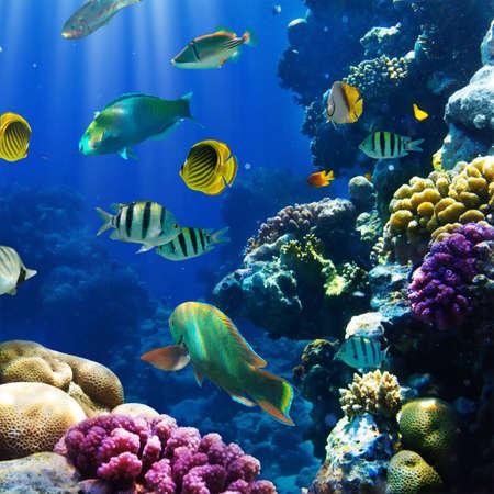 vis: Foto van een tropische vis op een koraal rif