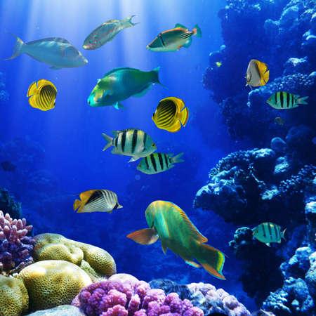 coral colony: Foto di una colonia di coralli su una scogliera, Egitto