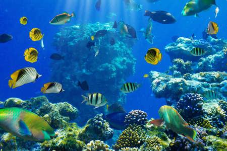 arrecife: Foto de un pez tropical de un arrecife de coral