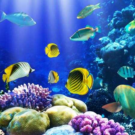 corallo rosso: Foto di una colonia di coralli su una scogliera, Egitto
