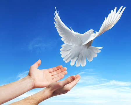 paloma blanca: las manos liberadas en el cielo azul con el sol una paloma blanca