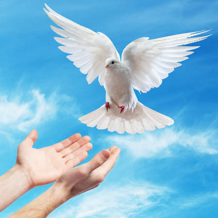 symbol peace: las manos liberadas en el cielo azul con el sol una paloma blanca