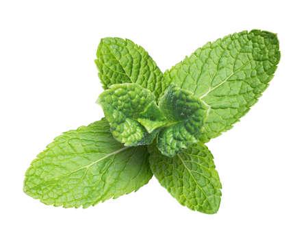 Image of fresh mint on white background photo