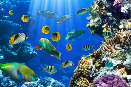 nurkować: ZdjÄ™cie z tropikalnych ryb na rafie koralowej