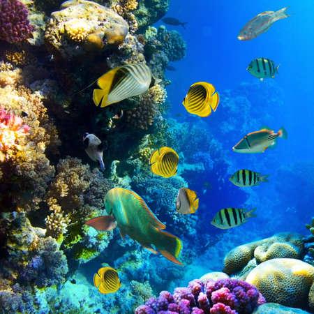 corales marinos: Foto de un pez tropical de un arrecife de coral