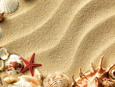 seashells: sea shells with sand as background Stock Photo