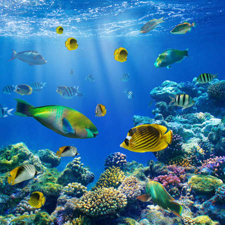 underwater: Photo of a tropical Fish on a coral reef