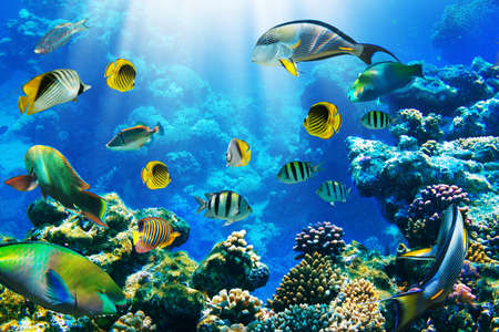corallo rosso: Foto di un pesce tropicale su una barriera corallina