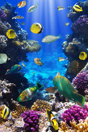 Photo d'un poisson tropical sur un récif de corail Banque d'images