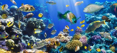 홍해에서 이집트 산호와 물고기