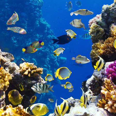 Photo of a tropical Fish on a coral reef Stock Photo - 12569096