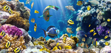 coral ocean: Photo of a tropical Fish on a coral reef
