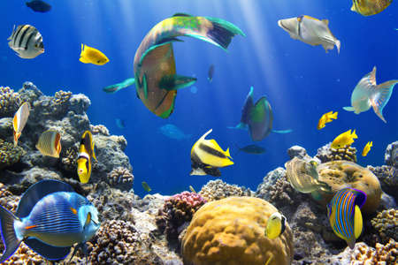 Photo of a tropical Fish on a coral reef Stock Photo - 12569154