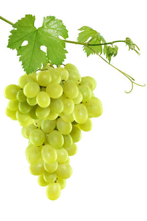 grapes on vine: Fresh green grapes with leaves. Isolated on white