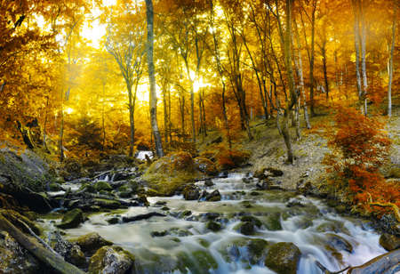 Autumn creek woods with yellow trees foliage and rocks in forest mountain. Stock Photo