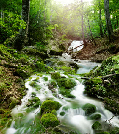 rain forest background: forest waterfall and rocks covered with moss Stock Photo