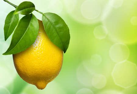 view of lemon hanging on a lemon tree, surround by foliage.