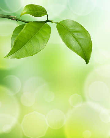 Green leaves on white foliage background Stock Photo - 17461118