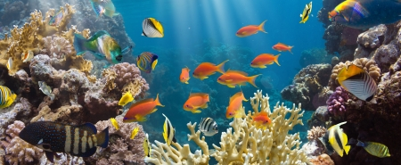 Coral and fish in the Red Sea.Egypt Banco de Imagens