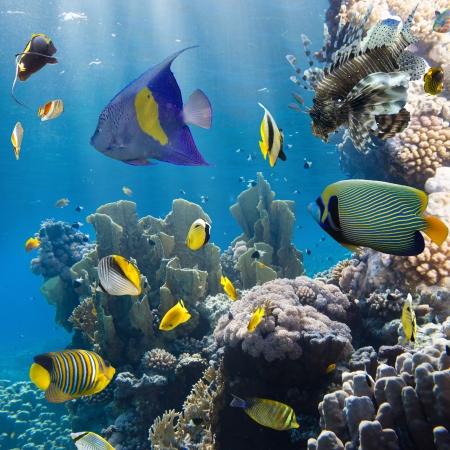 Korallen und Fische im Roten Sea.Egypt