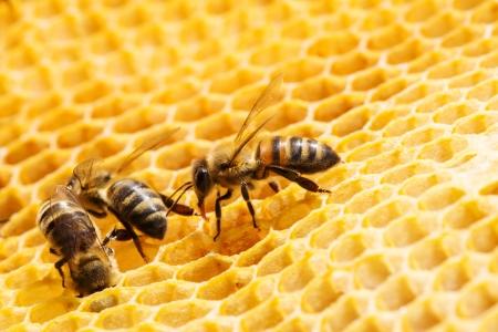 honeycells에서 작동 꿀벌의 뷰를 닫습니다