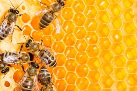 Close up van de werkende bijen op honeycells