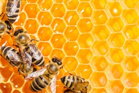 Honeycells で、働き蜂のビューをクローズ アップ 写真素材