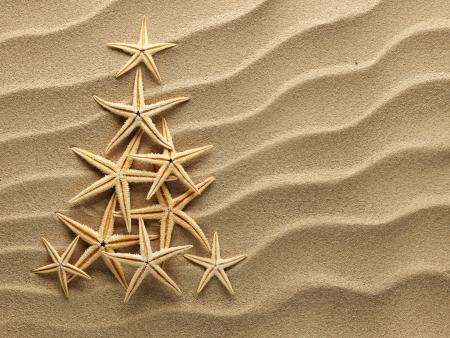 모래에 조개에서 크리스마스 트리 스톡 콘텐츠