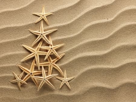 Christmas tree from shells on sand