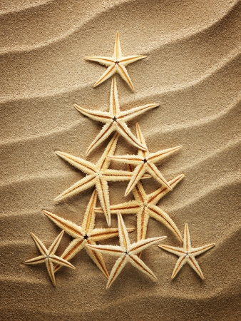 Christmas tree from shells on sand Stock Photo - 23938902