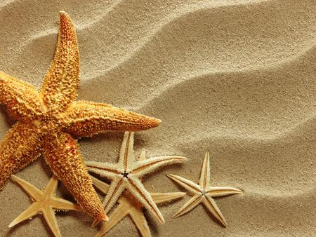 Muscheln mit Sand