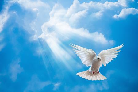 의 전면 태양의 활짝 열려 날개를 가진 공기에 비둘기