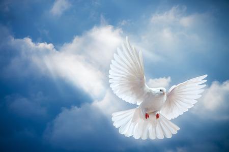 Duif in de lucht met vleugels wijd open in voor de zon