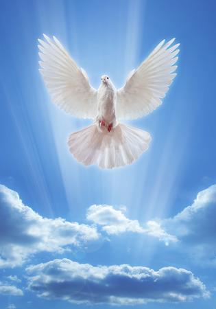 에서 전면 태양의 벌리고 날개를 가진 공기에 비둘기