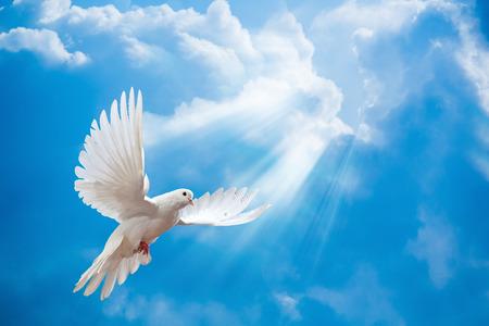 Paloma en el aire con las alas abiertas de ancho en frente del sol