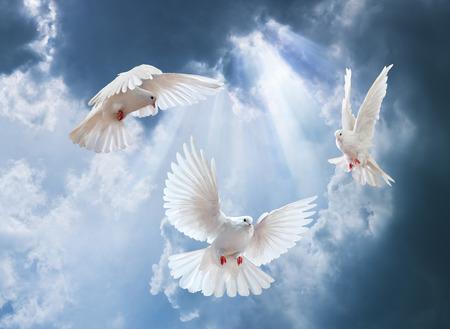 In der Luft mit Flügeln weit offen in-Vorderseite der Sonne Taube
