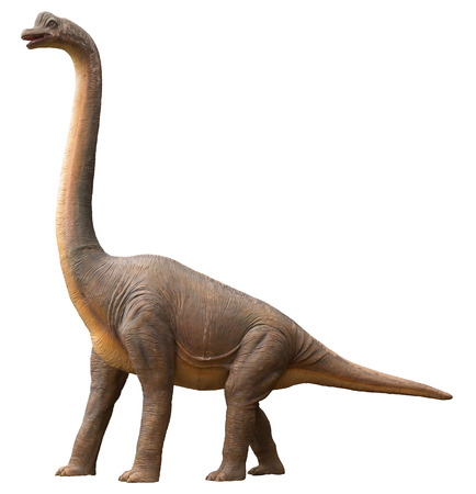 Life-like sauropod dinosaur which was a high browser and herbivore living during the Jurassic period, isolated on white Banco de Imagens