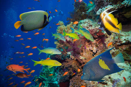 Tropical Fish and Coral Reef on Red Sea Stock Photo - 38752851