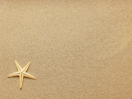 Starfish on Beach Sand. Close up Banco de Imagens