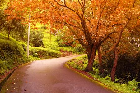 Strada attraverso la foresta mista verde. Immagine filtrata: caldo effetto vintage lavorato a croce.