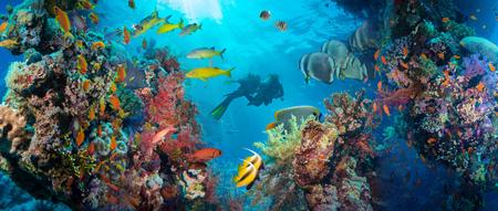 Poissons Anthias tropical avec coraux de feu nets sur la mer Rouge récif sous-marin Banque d'images - 46056720
